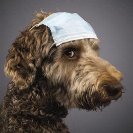 """Hundekalender 2021 """"Dogs Undercover"""""""